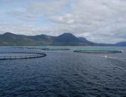 Lokaliteten Bjelkavik hos Rogaland Fjordbruk AS
